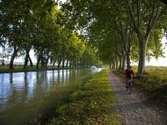 Lime Trees on Canal du Midi, Near Le Somail, Languedoc-Roussillon, France