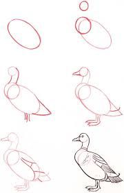 Easy Drawings Drawing-Tutorial-for-Occasional-Artists - While there are tons of things out there to draw, it is not simple always. However, these Drawing Tutorial for Occasional Artists will help you out. Pencil Drawing Tutorials, Pencil Art Drawings, Bird Drawings, Art Drawings Sketches, Animal Drawings, Easy Drawings, Art Tutorials, Drawing Animals, Art Illustrations