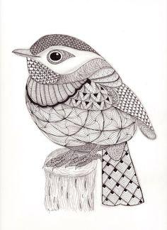 Tangled Little Flycatcher