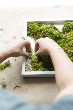 garden diy indoor wall art How to Make a Carefree Moss Garden - Dalla Vita