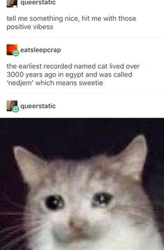 É queerstatic tell me something nice, hit me with those positive vibess ªeatsleepcrap the earliest recorded named cat lived over 3000 years ago in egypt and was called 'nedjem' which means sweetie - iFunny :) Cute Jokes, Funny Cute, Cute Funny Animals, Cute Cats, Cat Memes, Funny Memes, Funny Tweets, Pokemon, Funny Tumblr Posts