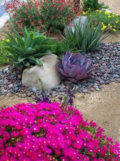 Xeriscape design using drought tolerant plants.