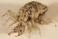 GJoyz - 娛樂分享區 - 27種看完後你會覺得蟑螂真的是很可愛的超恐怖昆蟲!