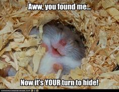 I hate hide and go seek but I think I would play it with this little guy :)