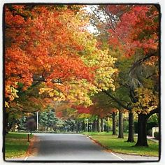"""Instagrammer Colleenlegrand thinks autumn """"is the best time of the year in Canberra. Just a the trees start changing colour and prepare for the leaves to fall. Love the coloured streets."""""""