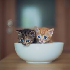 Bowl full of cutenss