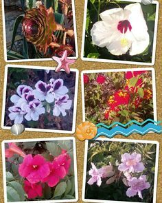 So blüht Spanien im Sommer. #spanien #spain #sommer #sonne #blühen #blüten #summer #sun #flower #flowersofinstagram #blumen #instapic #instaphoto #instapicture #flowersoftheday #flowerpower #instacolor #instagood #instagarden #plants #pflanzen #gartenträume #garten #gardeninspiration #garden #gardening #urbangardening