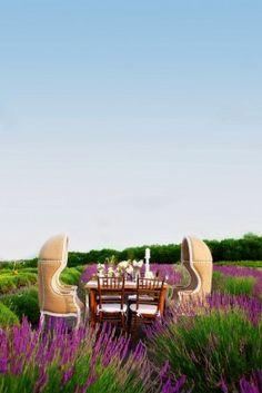 Wedding Inspiration on a Lavender Farm