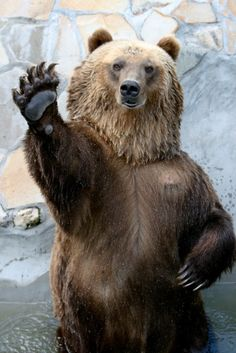 Grizzle Bear, HI5! :)