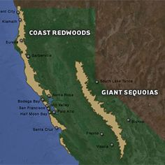old growth coast redwood map redwoods forest pinterest