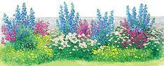 Kleine Staudenbeete zum Nachpflanzen - Seite 2 - Mein schöner Garten 1 Bartfaden (Penstemon), z. B. 'Blackberry Ice' in kräftigem Rotviolett, 9 Stück; 2 Rittersporn (Delphinium Belladonna-Hybride), z. B. ' Atlantis' in Blau, 4 Stück; 3 Mädchenauge (Coreopsis verticillata), z. B. 'Moonbeam' in Schwefelgelb, 10 Stück; 4 Sommer-Margerite (Leucanthemum superbum), z. B. die kompakte, standfeste Sorte 'Gruppenstolz', 8 Stück.