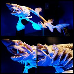 """buy-skulls:  """"Behold the cartilaginous skeleton of a sand tiger shark (Carcharias taurus)!! The Vancouver Aquarium has a whole exhibit on the inner workings of marine creatures, from skeletons to plastinated specimens!  """""""