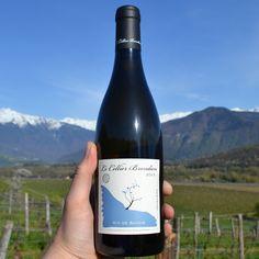 Jacquere ist eine weiße Rebsorte, die fast ausschließlich im Savoie zu finden ist und klare Weine mit viel Frische hervorbringt. Der Jacquere vom Cellier Brondien zeigt sich enorm filigran in der Nase mit Aromen von reifem Apfel, Zitronentarte und Kalk. Am Gaumen ist er schmelzig mit einer frischen, gut eingebundenen Säure. 90/100 Punkte Konstantin Baum