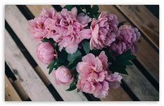 Pink Peonies Flowers in Vase HD Wallpaper for 4K UHD Widescreen desktop & smartphone