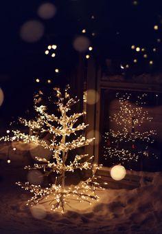 Night Christmas Tree Lights