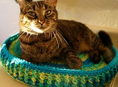 Ravelry: Technicolor Crochet Cat Bed pattern by SassySSS - Love these colors for my porch/solarium. Kitten Meowing, Animal Crafts, Pet Beds, Crochet Animals, Yarn Colors, Cat Toys, Cats And Kittens, Dog Cat, Mandala