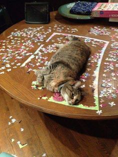 Cats And Puzzles: A Complicated Relationship - World's largest collection of cat memes and other animals I Love Cats, Cute Cats, Funny Cats, Silly Cats, Crazy Cat Lady, Crazy Cats, Angry Cat, Tier Fotos, Cat Facts