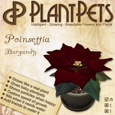 PlantPet Seed [Poinsettia *Burgundy*] SEASONAL