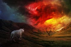 The tiger walks slowly, to the burning bush of an apocalypse. The White Tiger of Autumn by *kevinleedrum on deviantART Tiger Walking, Very Nice Pic, Nice Picture, Burning Bush, Scenery Pictures, Sand Art, Photo Manipulation, Art Music, Art Images