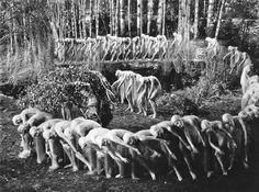 """oxane: """" A Midsummer Night's Dream Directed by William Dieterle, Max Reinhardt 1935 """" Max Reinhardt, Ian Hunter, James Cagney, Olivia De Havilland, Hot And Humid, Fantasy Films, Vintage Witch, Midsummer Nights Dream, Weird Pictures"""