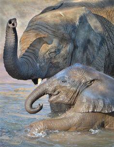 Adult & baby elephant in water All About Elephants, Elephants Never Forget, Save The Elephants, Baby Elephants, Amor Animal, Mundo Animal, Amazing Animals, Animals Beautiful, African Elephant