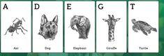 animal 4d card free download - John & Maggy Free Movie Downloads, Alphabet Cards, Live Animals, Animal Games, Photoshop, Image, Google, Rolodex, Alphabet Charts