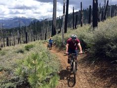 Home to a great network of trails, this is a good option for spring when the higher elevation terrain is still buried with feet of snow. Alpine Meadow, Alpine Lake, Best Mountain Bikes, Mountain Bike Trails, California Places To Visit, Trail Guide, South Lake Tahoe, Cross Country Skiing, Summer Fun