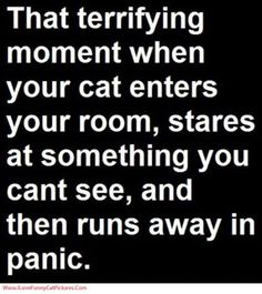 Or my dog starts barking at what I can't see!