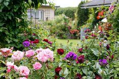 Kukkapenkki puun alle - Kotipuutarha Garden Cottage, Floral Wreath, Wreaths, Plants, Gardening, Google Search, Floral Crown, Door Wreaths, Lawn And Garden