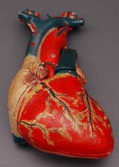 Heart from anatomical model   #heart #health #design #model #colour