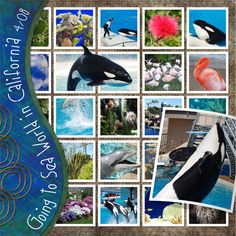 Love pages with lots of photos! sea world scrapbook - Nice layout for Disney as well Scrapbook Paper Crafts, Scrapbook Supplies, Scrapbook Cards, Travel Scrapbook Pages, Vacation Scrapbook, Scrapbook Sketches, Scrapbook Page Layouts, Multi Photo, 6 Photos