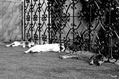 The hard life of a cat. #cat #cats #kitty #kitties