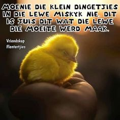 Afrikaans, Birds, Messages, Animals, Quotes, Animales, Qoutes, Animaux, Bird