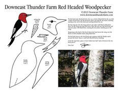 red headed woodpecker, Bird Stuffed Animal Pattern,  How to Make a Toy Animal Plushie Tutorial Plushies Tutorial , BIRDS Diy Projects, Sewing Template , animals, plush, soft, plush, toy, pattern, template, sewing, diy , crafts, kawaii, cute, sew, pattern,free bird template, woodpecker , handmade free pdf