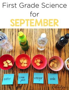 Engage students in science for September on topics like magnets, apples, matter, and fall through science experiments and integrating science and literacy. Stem Projects, Science Fair Projects, Science Experiments Kids, Science Lessons, Teaching Science, First Grade Science Projects, Life Science, 1st Grade Science Fair, Teaching First Grade
