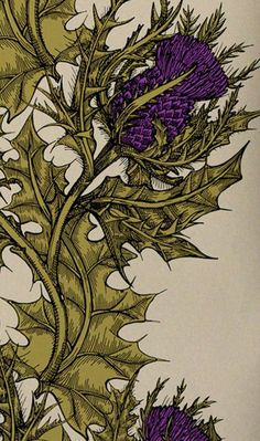 Vintage thistle botanical