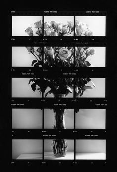 Valentines Roses Contact Sheet by A Level Photography, Photography Projects, Fine Art Photography, Film Aesthetic, Photocollage, A Level Art, Monochrom, Wallpaper Backgrounds, Wallpapers