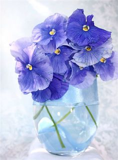 Periwinkle pansies are truly my favorite flower (along with bleeding hearts).