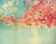 pretty :)   kwanzan cherry tree i think?