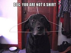 Du �r inte en skjorta