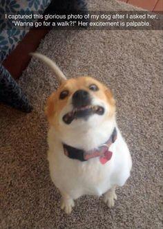 Wanna go for a walk?