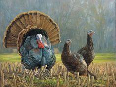Ryan Kirby Art — Wild Turkey Original Oil Paintings