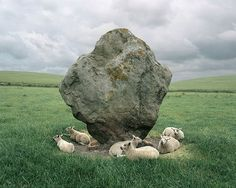 """""""Avebury Sheep and Standing Stone, England"""" - photo by Barry W. Andersen"""