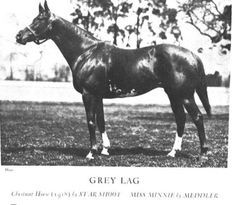 Grey Lag(1918)(Colt)Star Shoot- Miss Minnie By Meddler. 5x5 To Lord Clifden & Macaroni. 47 Starts 25 Wins 9 Seconds 6 Thirds. $136,375. Won 1921 Belmont S, Dwyer S, Empire City Derby, Brooklyn H, Knickerbocker H, Metropolitan Mile, 2nd Jockey Cup Gold Cup. Dosage Listed Him As Not Being Able To Get A Distance Of Ground But His Pedigree Had Most Of The Most Famous Distance Horses From England During His Generation. Her Sire, Star Shoot, Was Also Sire Of U.S. 1st TC Winner Sir Barton.