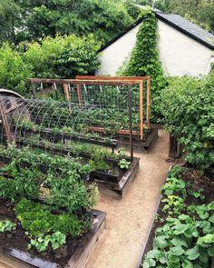 Backyard Vegetable Gardens, Potager Garden, Vegetable Garden Design, Greenhouse Gardening, Garden Landscaping, Farm Gardens, Outdoor Gardens, Raised Garden Beds, Raised Beds