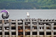 Point of Bay, Newfoundland. Many seagulls perch on this wharf! Newfoundland, All Pictures, Photography, Fotografie, Photography Business, Photo Shoot, Fotografia, Photograph