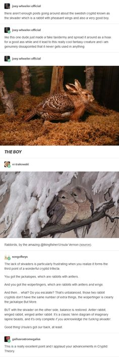 When mythology turns cute! Fantasy Creatures, Mythical Creatures, Mythological Creatures, Funny Animals, Cute Animals, Animal Memes, Tumblr Stuff, Looks Cool, Writing Prompts