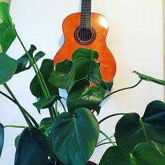 #gift #quitar #viherpeukalo #peikonlehti #monstera Instruments, Gift, Tools, Presents, Musical Instruments, Gifts
