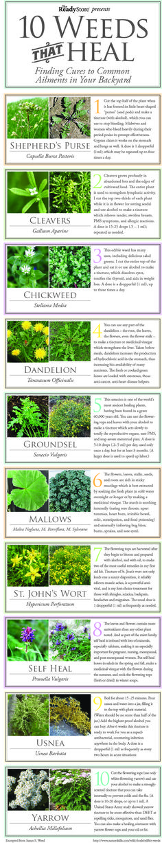 This is a great graphic on how weeds – found in your own yard – can be used to help heal sicknesses, burns, sores and other ailments.