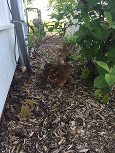 Found this little guy sitting outside my front door this morning - Imgur